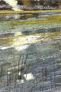 L'étang vert - C.P 24*31